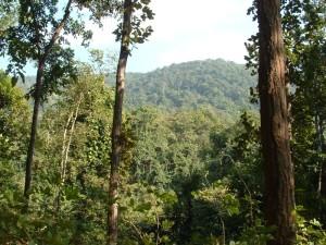 Niaymgiri-forests