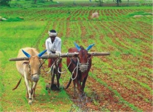 Agriculture-India