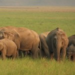 Man trampled to death by wild elephants