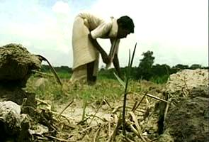 Bihardrought295_10