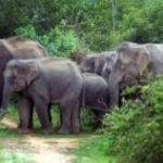 Elephant tramples man to death in Odisha's Keonjhar dist; irate villagers block road