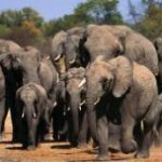 Man killed in jumbo attack in Odisha
