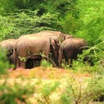 Odisha villagers block NH over jumbo menace