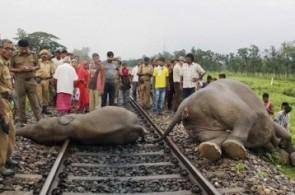 Elephants killed by train
