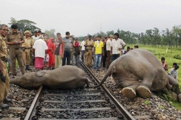 Elephants killed by train