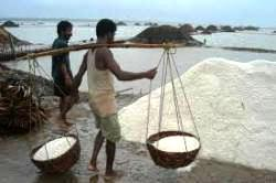 salt-manufacture