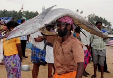 A fisherman leaves for the auction with a headload of the day's largest catch (Pic: Sanu George)
