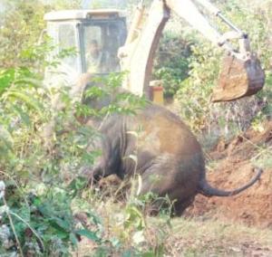 elephant menace