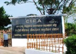 CIFA 1
