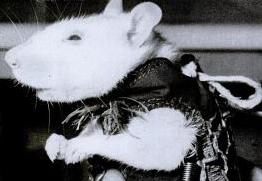 Astro-rat (source:tumbir.com)