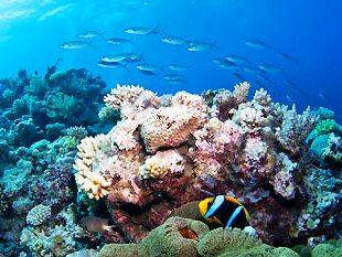 (source:underwater.au.com)
