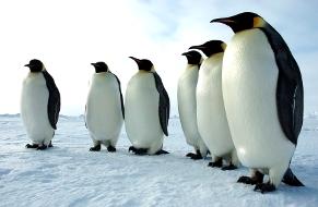(Photo courtesy Glen Grant, U.S. Antarctic Program, National Science Foundation.)