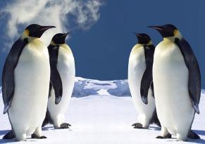 Emperor Penguins ( source : cheerseducom.tw)