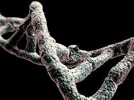 Human DNA strand  (source dailymail.co.uk)