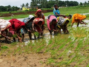 farming Sowing Transplant Agriculture Ga
