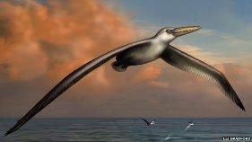 largest flying bird