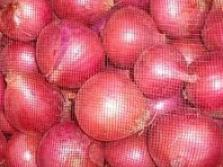 onions small size pic