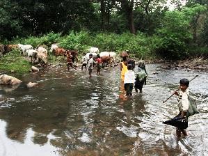 ( courtesy: tehelka.com/pic-Vijay Pandey)