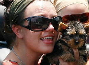 Britney Spears with her pet dog
