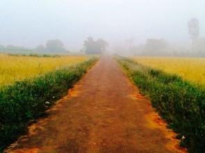 Early morning fog ( pic-Ranjan Rath)