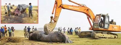 whale at astaranga