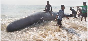 whale carcass found