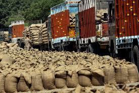 wheat laden trucks