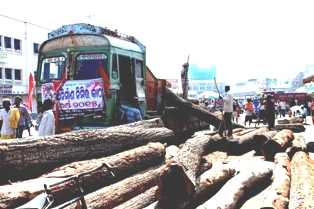 Logs for chariots arrives in Puri