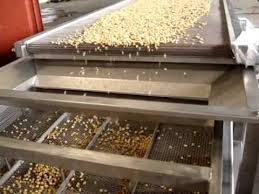 Maize processing plants are turning out to be killing machines
