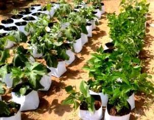 Coir grow bags