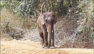 shankar the mahout killer