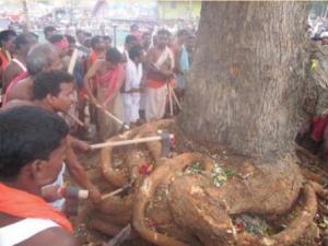 balabhadra daru felling