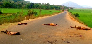 dead bodies of four youths