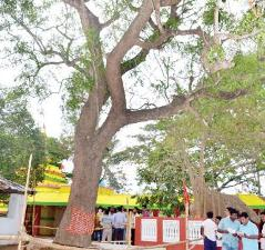 The site of the Subhadra daru