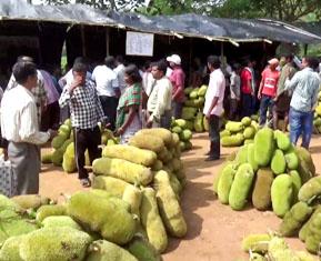 Adivasi Bazar
