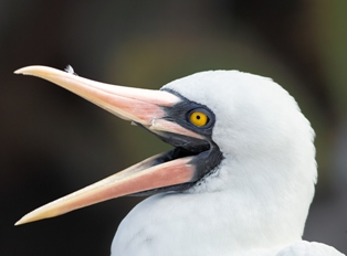 pic: www.birdsasart-blog.com