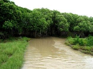pic; orissa-tourism.com