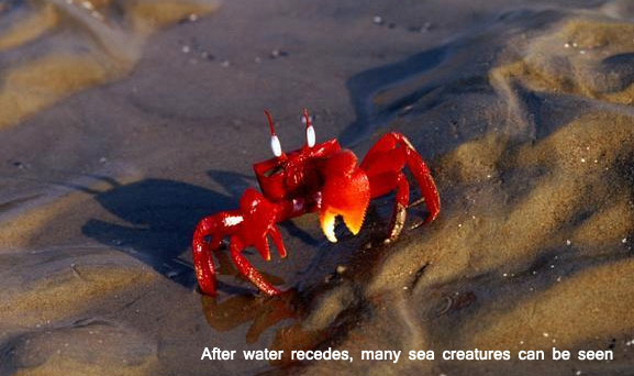 Pic Courtesy: www.crab biswaranjanparida9.blogspot.com
