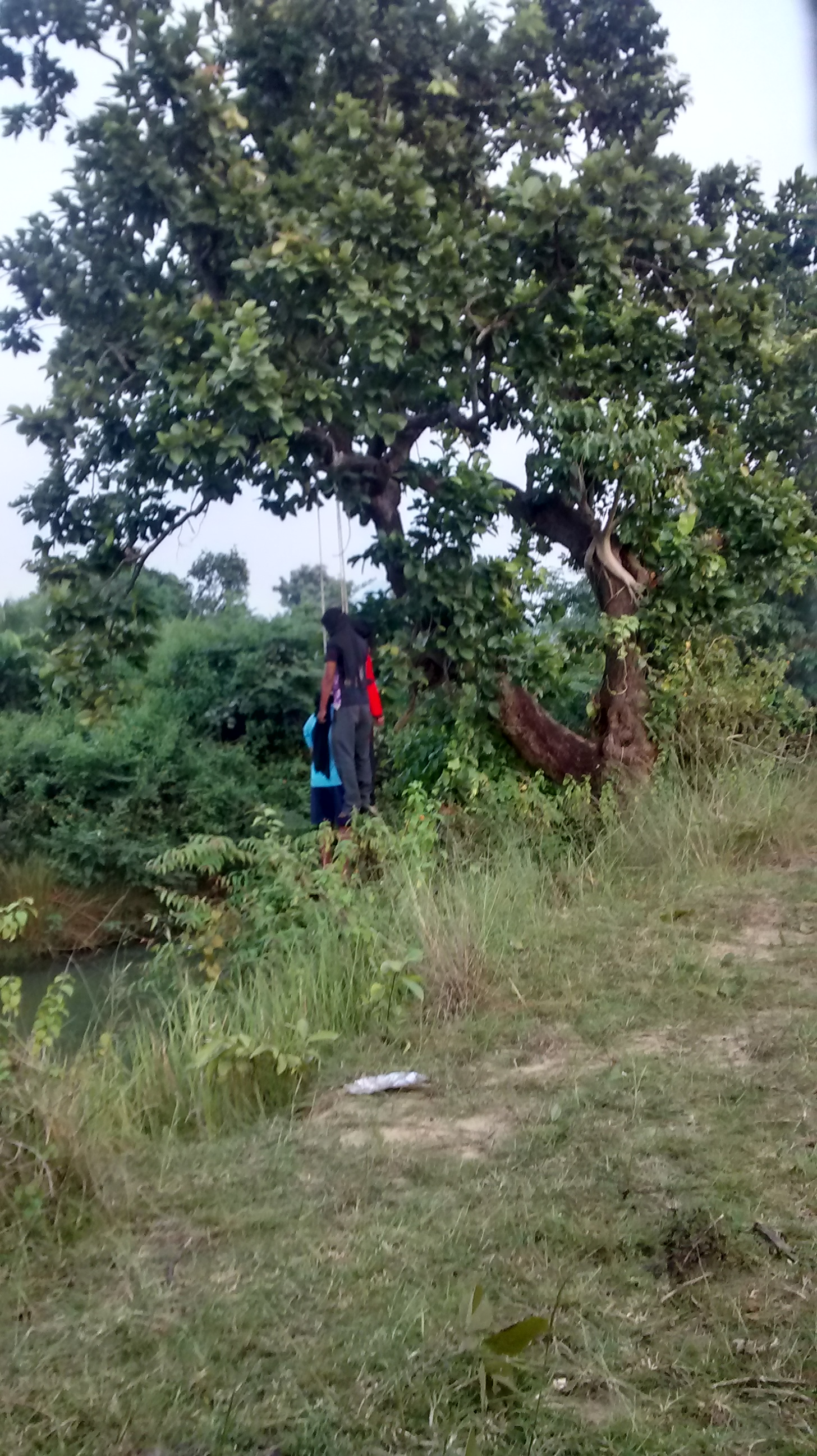 THREE PERSONS HANG THEMSELVES IN THE BRANCH OF A TREE