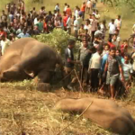 Two Odisha forest staff suspended for jumbo deaths