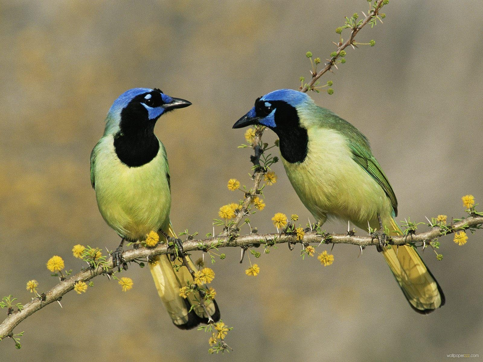 wild-birds