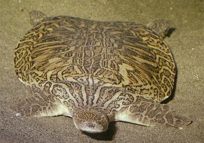 www.turtlesurvival.org
