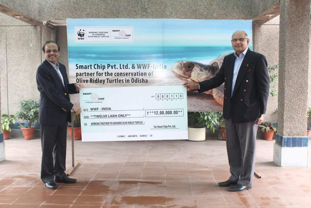 WWF-INDIA to help conserve olive Ridley turtles in Odisha