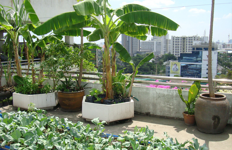 Rooftop Kitchen Gardens Getting Popular In Odisha Capital - Rooftop vegetable garden ideas