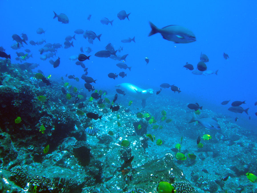 Small marine animals too may depend on sound for ...