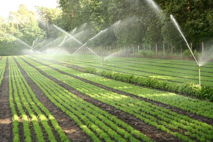 Pic Courtesy: www.agrobiodiversity.science