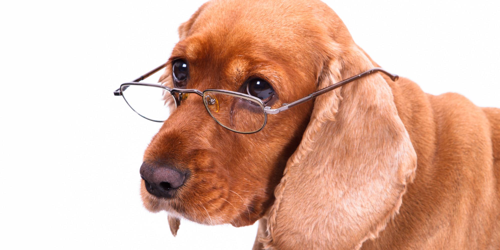 photo: www.petsworld