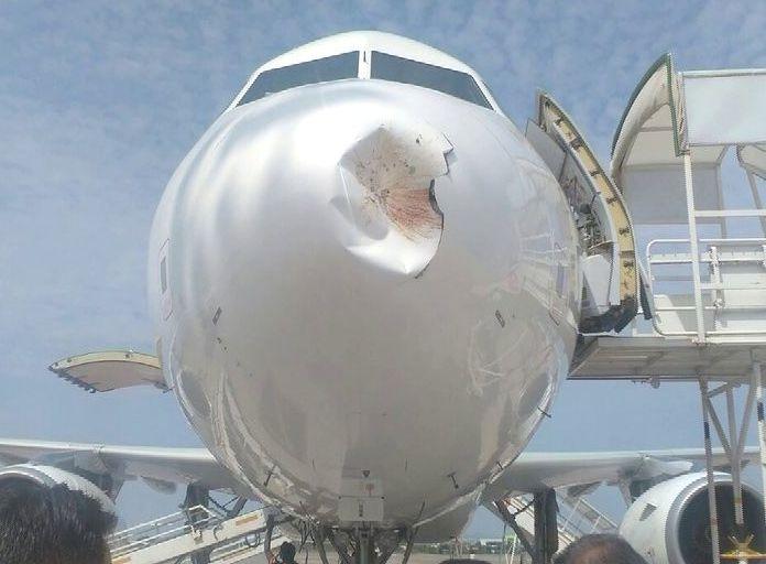 air vistara bird hit in Bhubaneswar BPIA