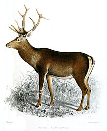 Pic.en.wikipedia.org