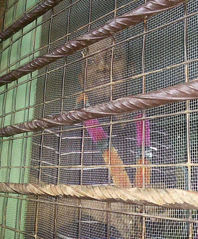 Pradip Majhi in Umerkote jail